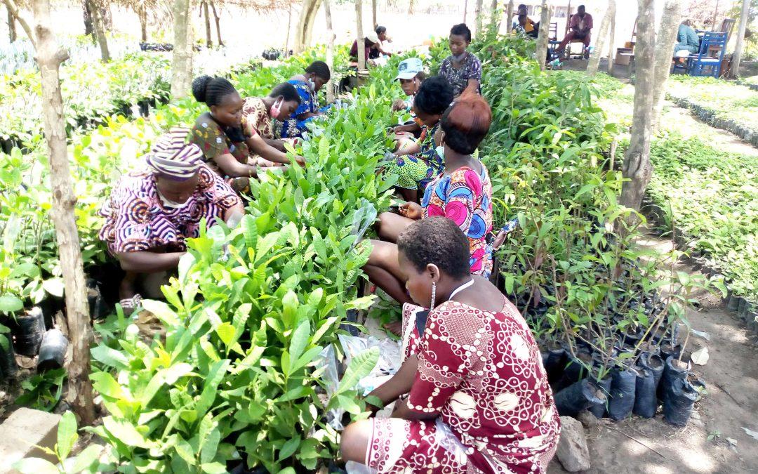 Production de matériel végétal performant: la FENAPAB forme un pool de 79 femmes greffeuses