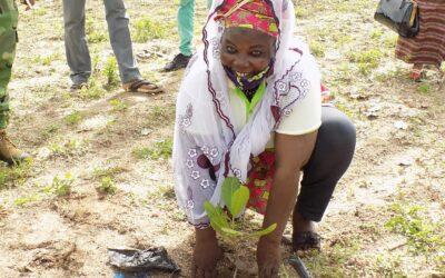 Journée de mise en terre de l'anacardier: la FENAPAB lance la 1ère Edition avec 300 plants greffés